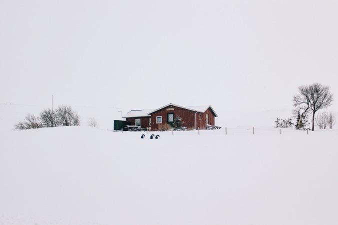 Little houses 02